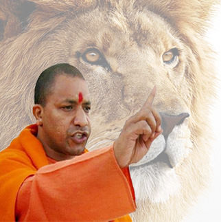 yogi with lion tiger